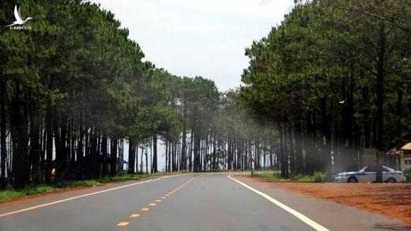 Những rừng thông rải rác hai bên đường là điều hiếm có ở những cung đường khác.