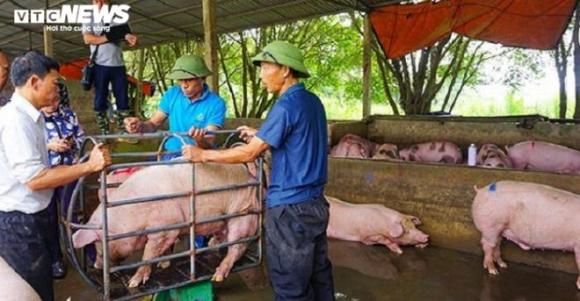 Vì sao Thủ tướng càng chỉ đạo giảm, giá lợn càng tăng? - 1