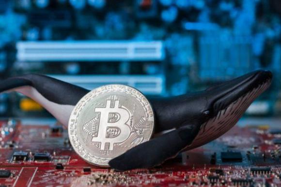 Bitcoin đang là cuộc chơi của các cá voi?