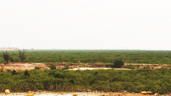 Nếu được phê duyệt, hàng chục ha rừng ngập mặt sẽ chuyển đổi mục đích sử dụng sang đất dành cho khu công nghiệp /// Ảnh Lã Nghĩa Hiếu