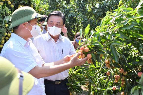 Bộ trưởng Lê Minh Hoan: Nên ɓỏ ᴛừ giải cứu nông sản - Ảnh 1.