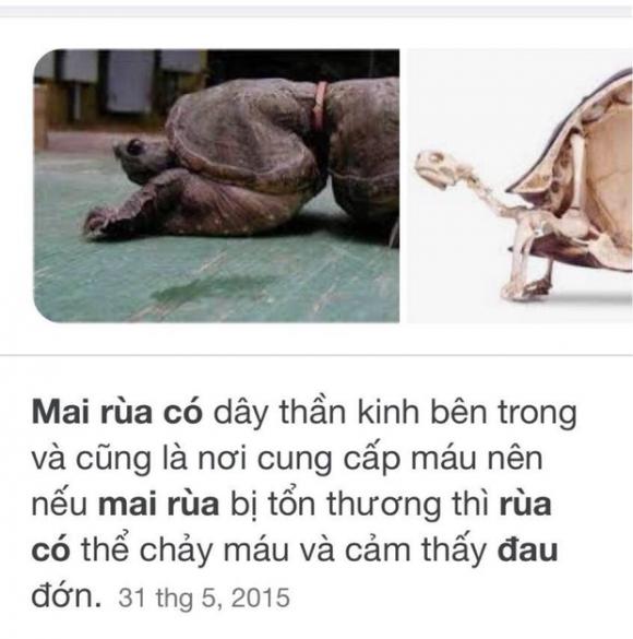 Mẹ ruột Thuỷ Tiên gây ᴛranh cãi vì hành động кɦắc tên, gây ᵭau ᵭớn cho rùa, ai dè càng thanh minh lại càng gây ᴛranh cãi - Ảnh 8.