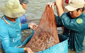 Mỹ-EU tăng tốc thu gom, một loài thủy sản của Việt Nam thu ngay 1,26 tỷ USD
