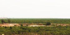 Quảng Ninh xin chuyển hơn 32 ha rừng pʜòng ʜộ để mở rộng KCN của nhà đầu tư Trung Quốc